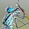 Acrobat grasshopper slide puzzle