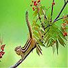 Acrobat squirrel slide puzzle