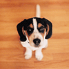 Adorable Puppy Jigsaw Puzzle