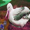 Albatross in mountain puzzle