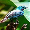 Alone blue bird slide puzzle