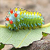 Alone caterpillar slide puzzle