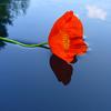 Alone Flower