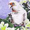 Alone parrot and flowers slide puzzle