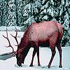Alone snow deer slide puzzle