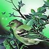 Alone sparrow puzzle
