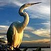 Alone Stork slide puzzle