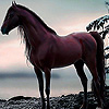 Alone wild horse in woods puzzle