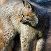 Amazing animals hidden numbers