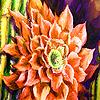 Amazing garden flowers puzzle