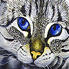 Angry cat blue eye slide puzzle