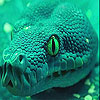 Angry green snake slide puzzle