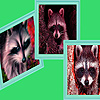 Angry raccoons puzzle