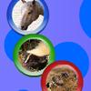 Animal Rotospheres