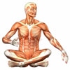Aprender ingles (el cuerpo)   English learning (Human body)