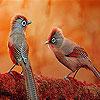 Autumn village birds slide puzzle