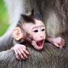 Baby Monkey Slider Puzzle