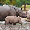 Baby Rhino Slider Puzzle