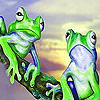 Baffled frogs puzzle