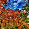 Beautiful Fall Tree Jigsaw Puzzle