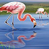 Beautiful flamingos puzzle
