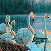 Beauty swans in lake puzzle