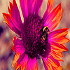 Bee and sunflower in garden  puzzle
