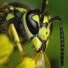 Bee Jigsaw