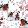 Berries Birds Sliding