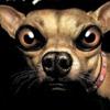 beware of dog tower defense