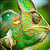 Big chameleon slide puzzle
