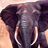 Big desert and elephants puzzle