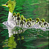 Big duck family slide puzzle