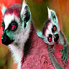 Big lemur family puzzle