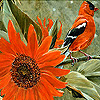 Bird and sunflower slide puzzle