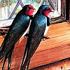 Birds in the house  puzzle