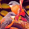 Birds love puzzle