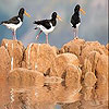 Birds on the rock slide puzzle
