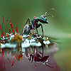Black ant in the lake slide puzzle