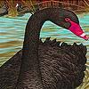Black beauty slide puzzle