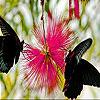 Black butterflies slide puzzle