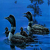 Black ducks in the lake slide puzzle