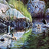 Black ducks in the river puzzle