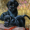 Black funny puppies puzzle