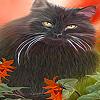 Black grumpy cat puzzle