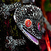 Black jungle gecko slide puzzle