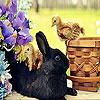 Black rabbit slide puzzle