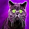 Black scaredy cat slide puzzle