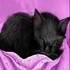 Black sleepy cat slide puzzle