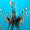 Black striped fish slide puzzle